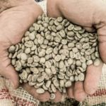 supporto-scelta-caffè-min-Produzione caffè